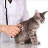 Ветеринарные клиники в Пижанке